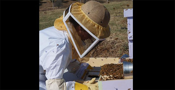 Honey co-ops help Afghan women stand on their own