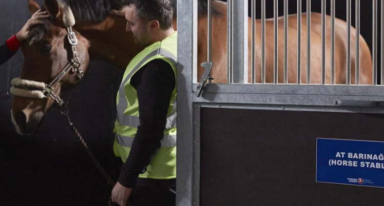 Turkish Cargo carries horses from US to Turkey