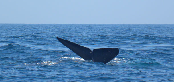 Blue whale spotted in Red Sea for first time