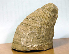 Scientific mapping of Malatya for rudist fossils ends