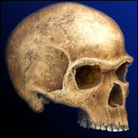 Clues found for early Europeans