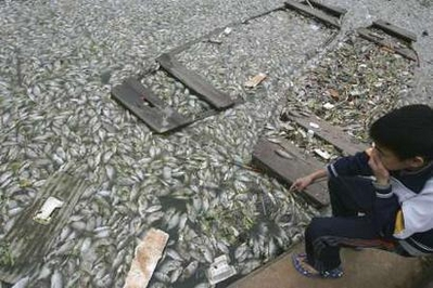 Climate change threatens world's fish stocks: UN group