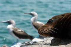 Galapagos in dire straits