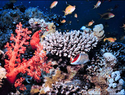 Cut greenhouse gases to save coral reefs -scientists