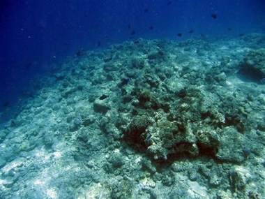 Earthquake causes coral reefs to die