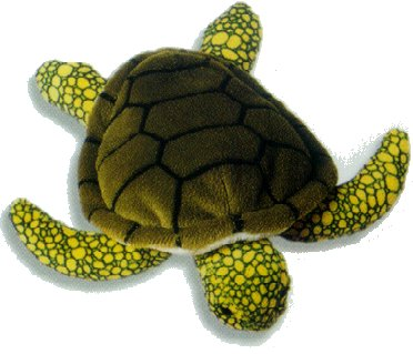 Taiwan Strives to Conserve Rare Turtles