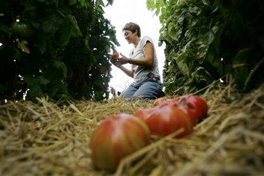 Cuba experiments with wholesale market for farmers