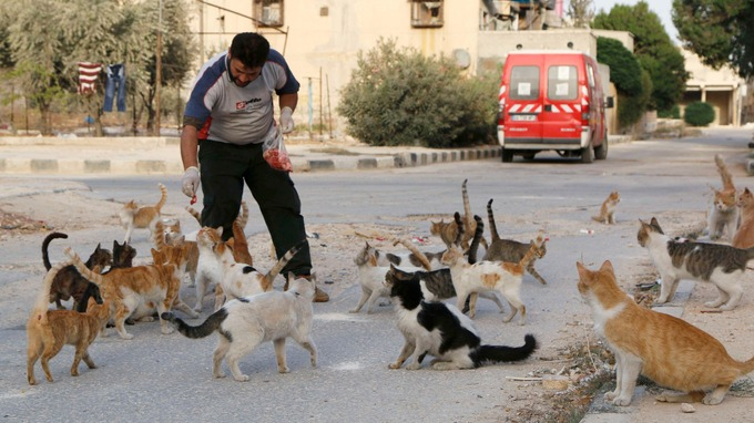 Syrian ambulance driver feeds Aleppo's starving stray cats