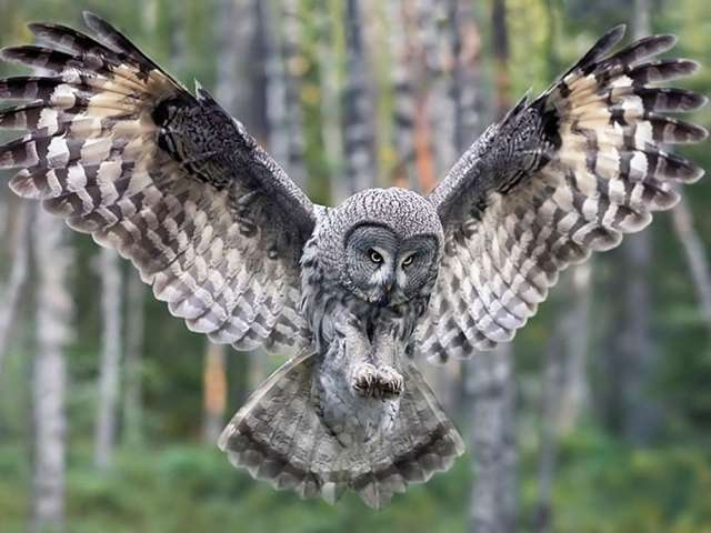 South Africans deploy owls to fight rat problem