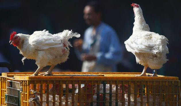 Philippines declares first ever H5 bird flu outbreak