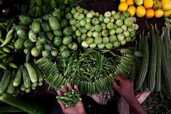 World food prices fall in January