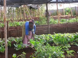 iCow and M-Farm apps reboot African agriculture