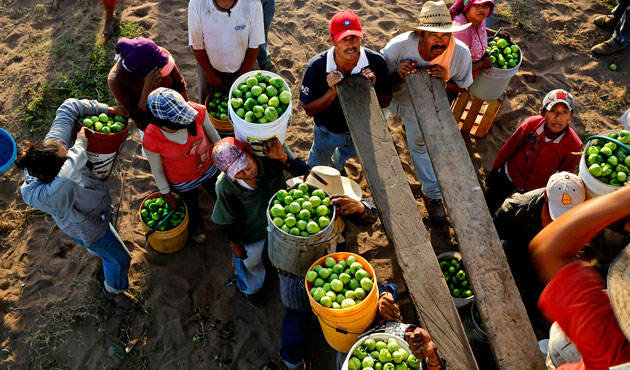 Mexico farmworkers launch global campaign for life standarts