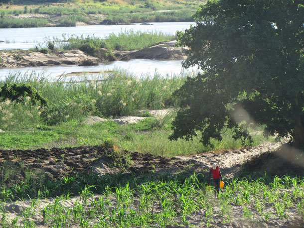 Mozambique agri. plan could displace 100,000 farmers