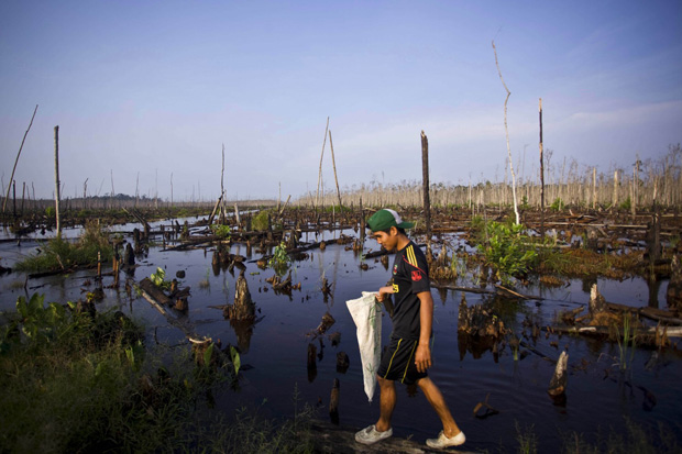 Asian paper giant stops cutting Indonesia's rainforests