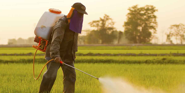 WHO says insecticides lindane, DDT linked to cancer