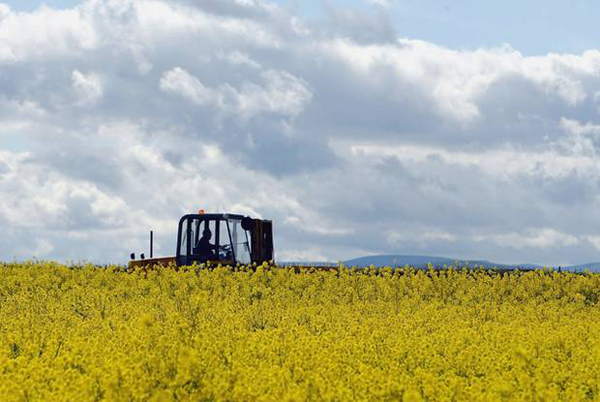 Scotland to ban growing of genetically modified crops