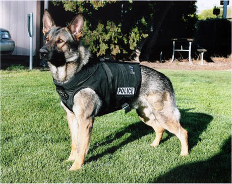 K9 police-dog use surges in Turkey