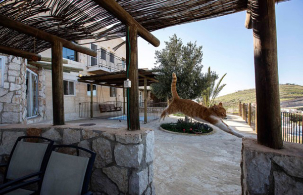 Airbnb condemned  for illegal West Bank listings
