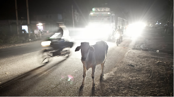 'Cow-protection' group attacks family in Jammu-Kashmir