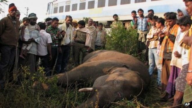 Five elephants killed by train in India