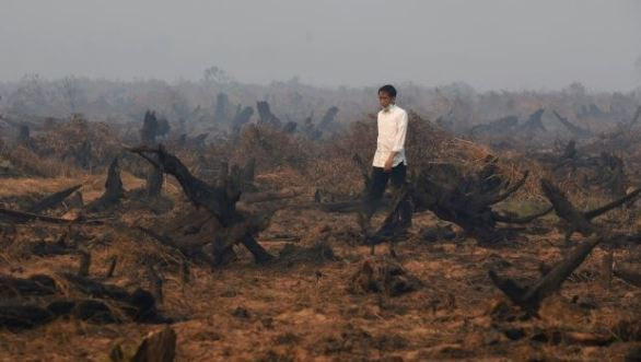 Indonesia eyes lax palm oil rules in EU trade deal