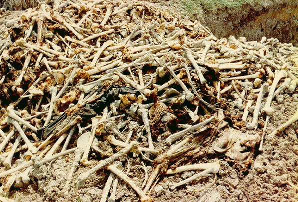WWI-era mass grave with 20,000 skeletons found in Bitlis