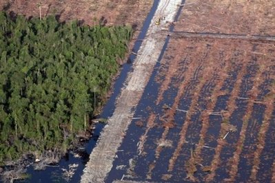 Asia-Pacific failing to save forests, grassland loss