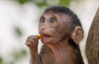 Chinese scientists produce gene-edited monkeys