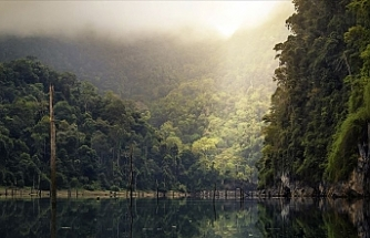 Japan, Brazil sign deal for Amazon's biodiversity