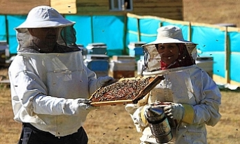 Turkey's Anzer honey gets geographical indication
