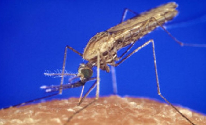 New mosquito type seen making malaria fight harder