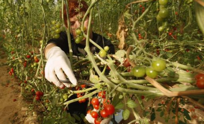 Russia 'ready' to increase imports of Turkish tomatoes