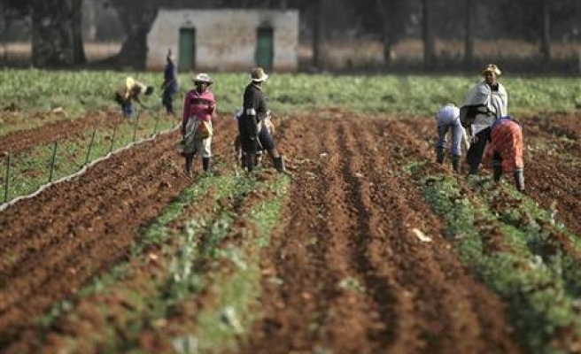 Climate change threatens Zambia's farmers