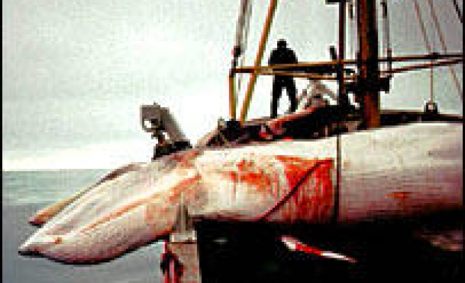 Norway's whale catch falls short