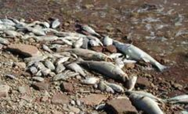 Deadly Fish Virus Spreads in Northeast
