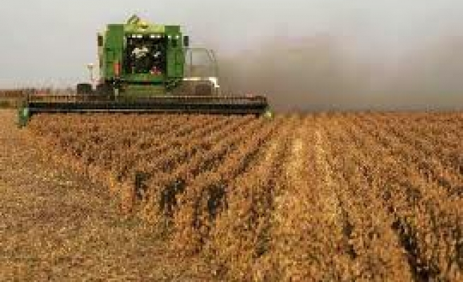 Argentine gov't slams farmers for withholding crops