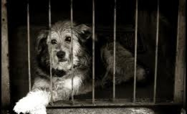 Turkey to fine animal rights abusers