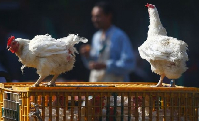 Nigeria H5N1 bird flu spreads to four more states