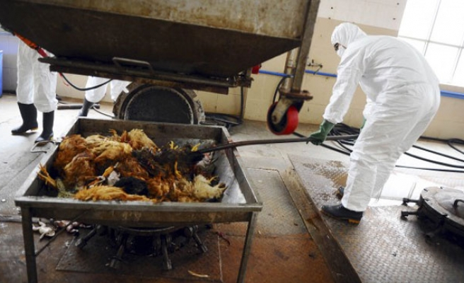 Bird flu kills one in Vietnam