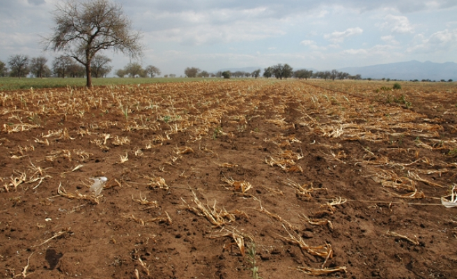 Heavy rains lead to food price inflation in Uganda