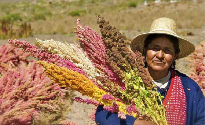 Miracle crop: Can quinoa help feed the world?
