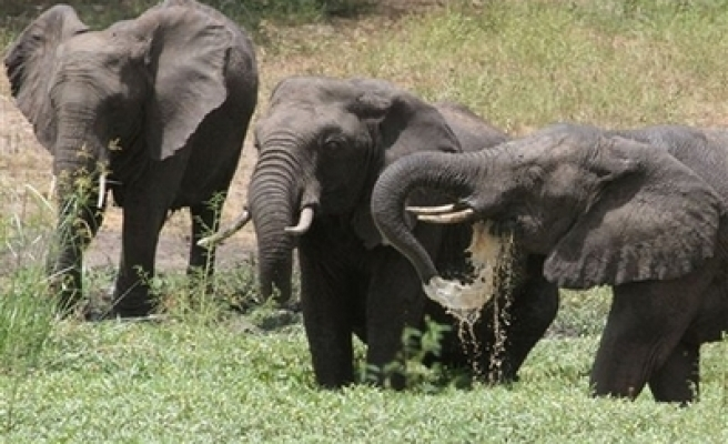 Cameroon deploys troops to fight poachers