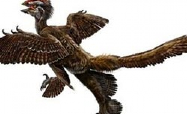 China finds bird-like dinosaur with four wings
