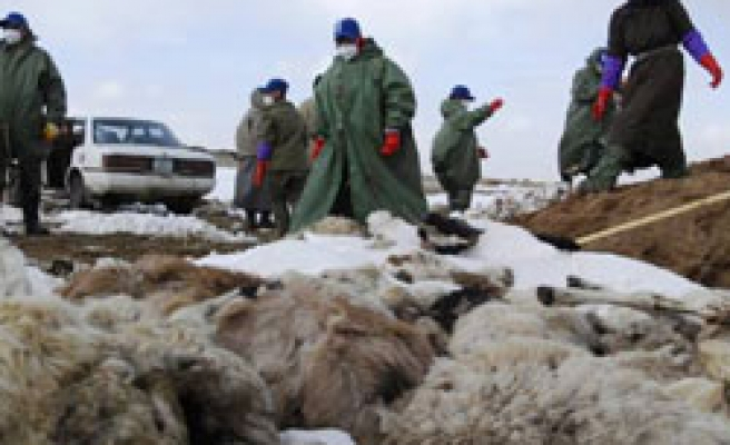 Mongolia declared disaster after fierce winter