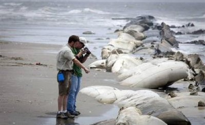 Dolphin, turtle deaths eyed for links to oil spill