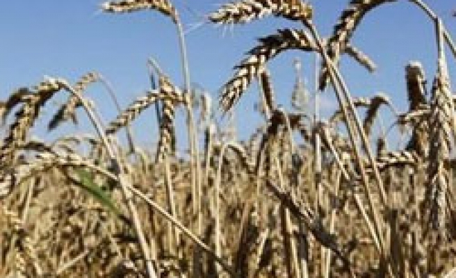 Algeria buys wheat to avoid shortage, unrest: source