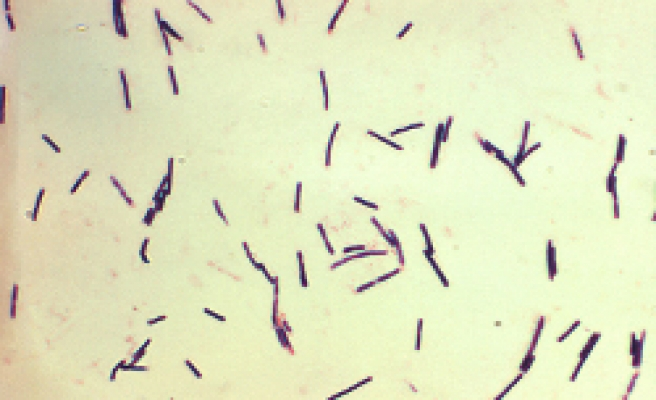 Bacteria trigger production of key immune cells