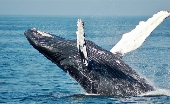 Norway keeps whaling despite severe criticism